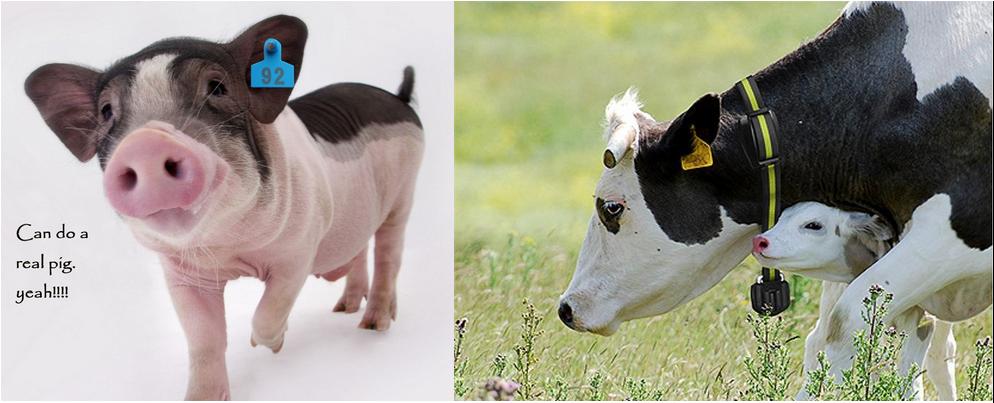 RFID animal racing (1)